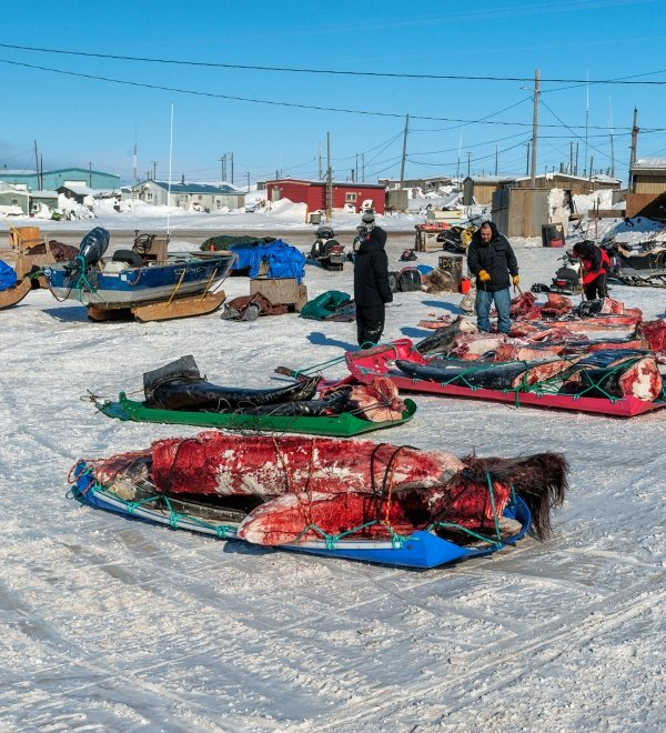 Subsistence Whale Harvest Activities