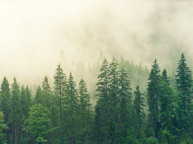 image: katyn forest