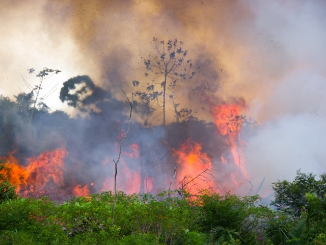 Forest Fire in the Amazon