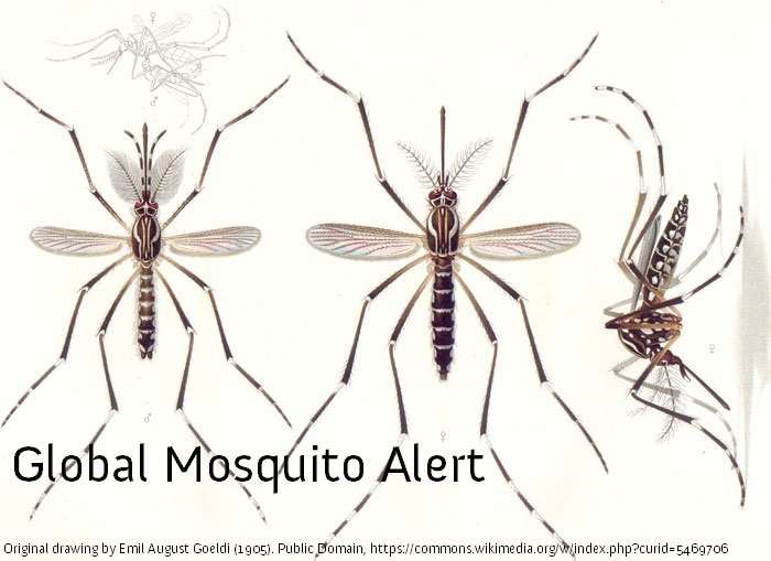 PRESS RELEASE: Global Mosquito Alert