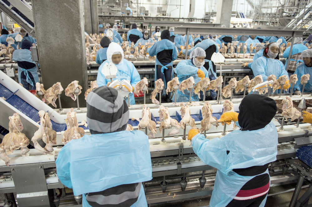 orkers in cold food processing plants
