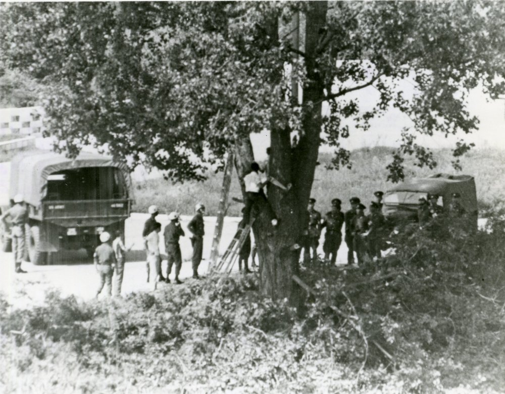 Black and white photo of men gathered around a tree as it's being pruned.