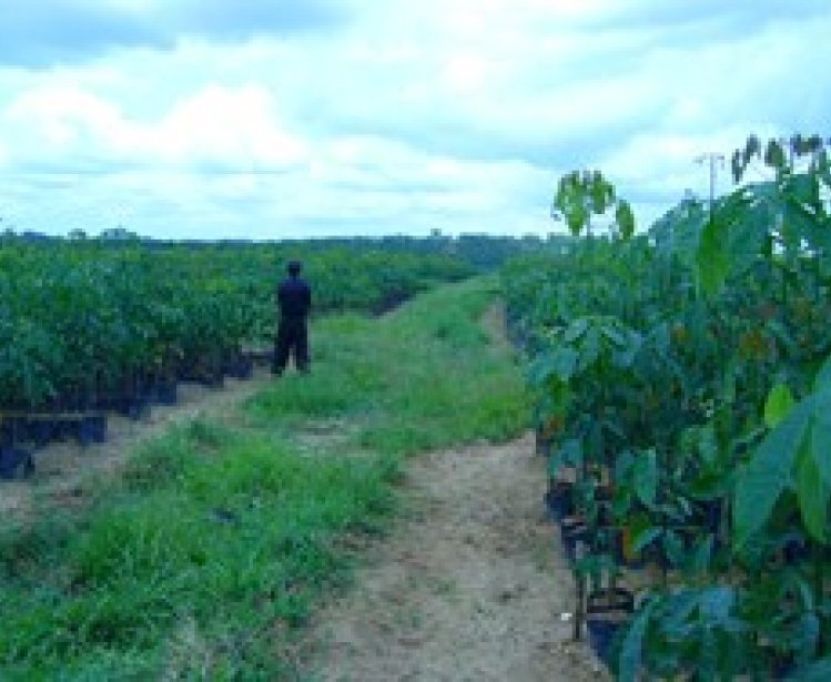 Promoting Responsible Agricultural Investments in Africa