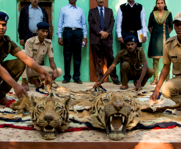 Wild Laws: China and Its Role in Illicit Wildlife Trade