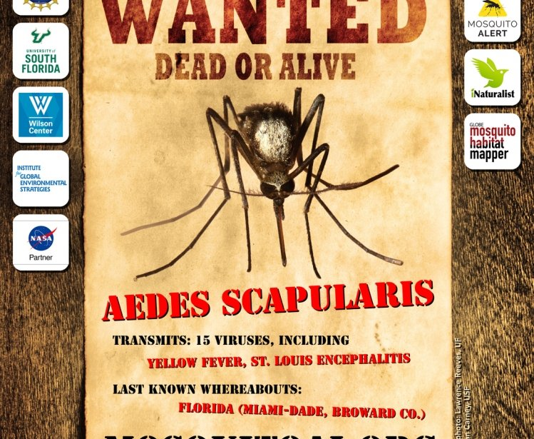 Wanted Dead or Alive: Aedes Scapularis
