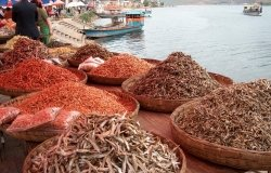 Sustainable Fishing and the Health of the World's Oceans