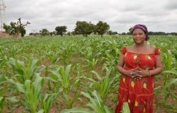 Plan for Boosting Ghana's Agricultural Productivity