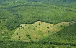 (Agri)business as Usual: Curbing Deforestation in the Amazon Rainforest