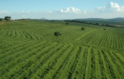 Strengthening Sustainable Food Production in Brazil and the Southern Cone