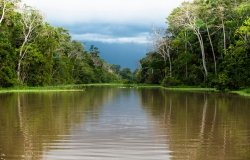 The Scientific, Social, and Economic Dimensions of Development in the Amazon