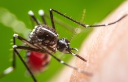 Global Mosquito Alert: Building Citizen Science Capacity for Surveillance and Control of Disease-Vector Mosquitoes