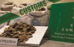 Seized pangolin scales are seen at a Hong Kong Customs & Excise Department press conference at the Kwai Chung Customhouse Cargo Examination Compound, Kwai Chung, Kowloon, Hong Kong, China