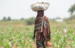 Farmer African girl walking in farm field in Chad N'Djamena travel, located in Sahel desert and Sahara.