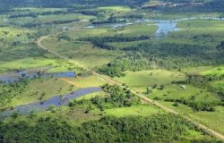 Aerial view of the Amazon Rainforest, near Manaus