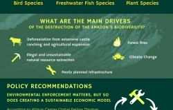Image - BI infographic - Amazon Biodiversity 2021