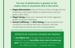 The State of the Global Tropics Infographic