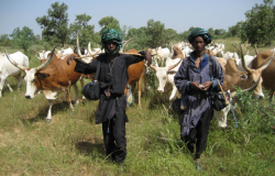 Fulani shepherds and their livestock at the end of the rainy season in western Mali