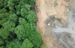 Separated Land of Trees and Dirt with Trucks Deforesting and Mining