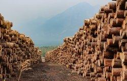 Image - Lumber