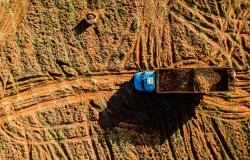 Aerial view of the cassava harvest in Mato Grosso do Sul, Brazil