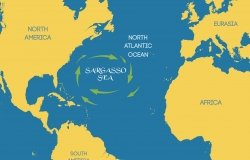 Graphic rendition of the Sargasso Sea in mid-Atlantic Ocean