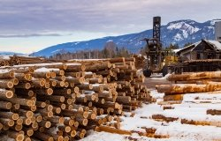 Image - Lumber in Canada